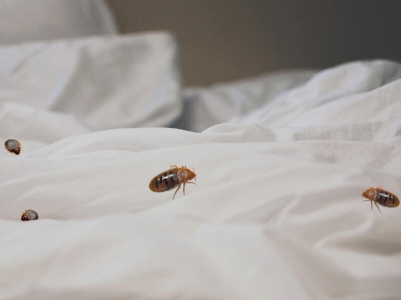bed bugs pest control mission - 800×600
