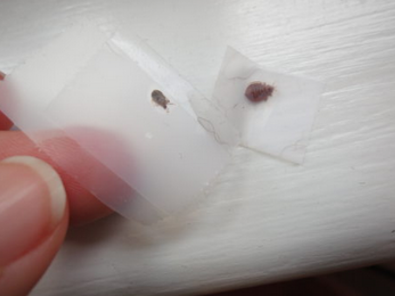 Pest Control Company to Eliminate Bed Bugs from Your House1