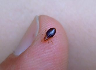 Choose Right Pest Control Company to Eliminate Bed Bugs from Your House