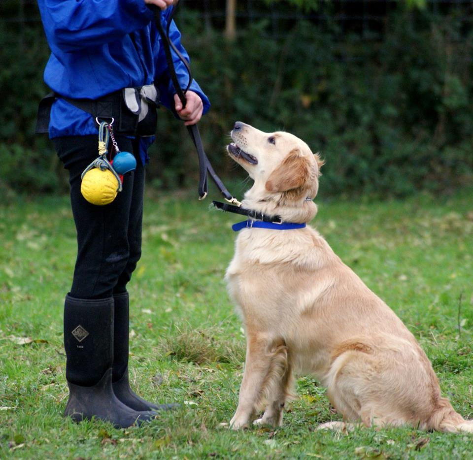 Fully Trained Dog