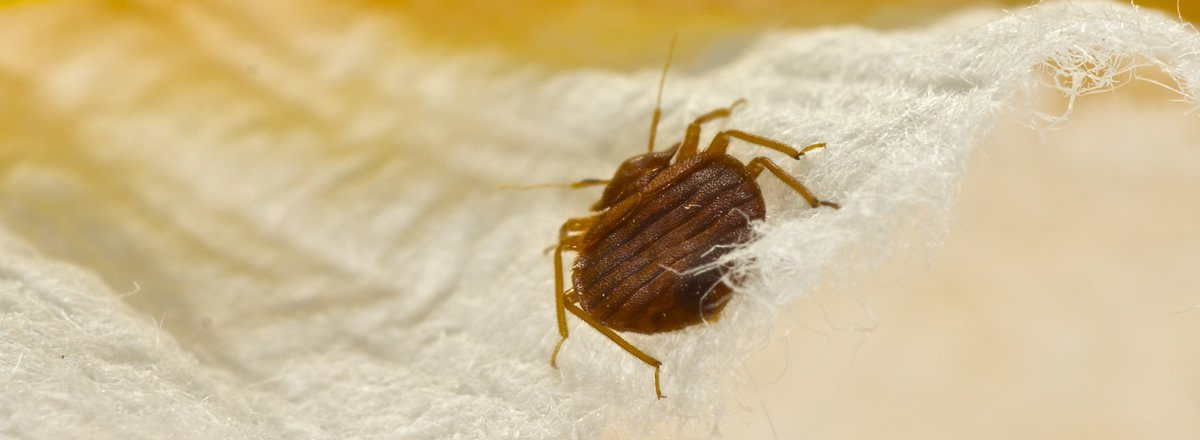 Home Needs a Bed Bug Infestation Treatment