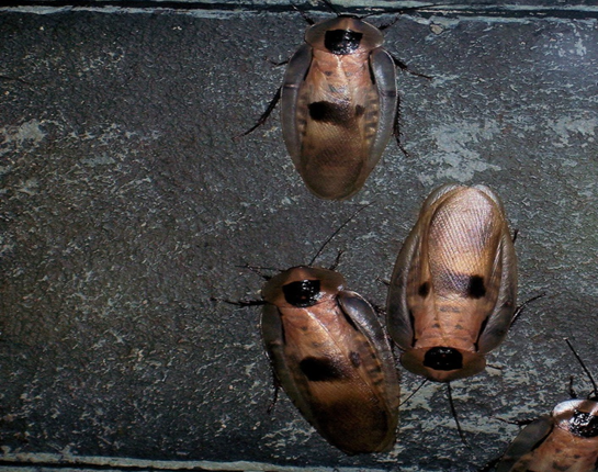 Take Care of a Cockroach Infestation Fast
