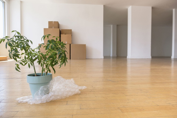 Move Houseplants Into Your New Home 1