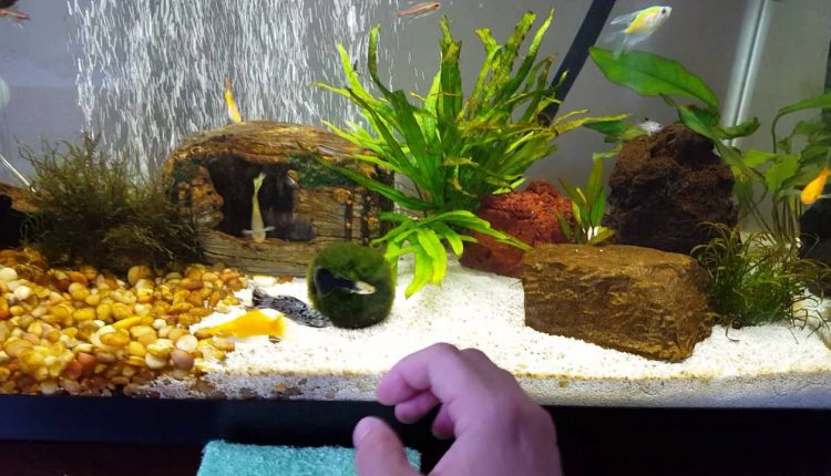aquaponics fish tank with bacteria growth on the sides2