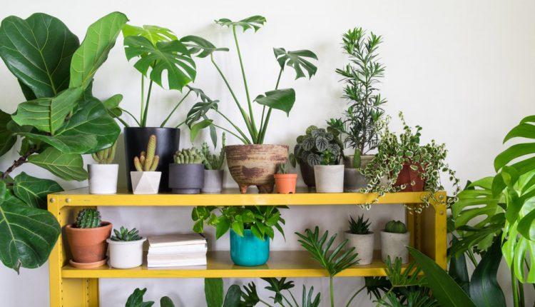 Peak indoor plants